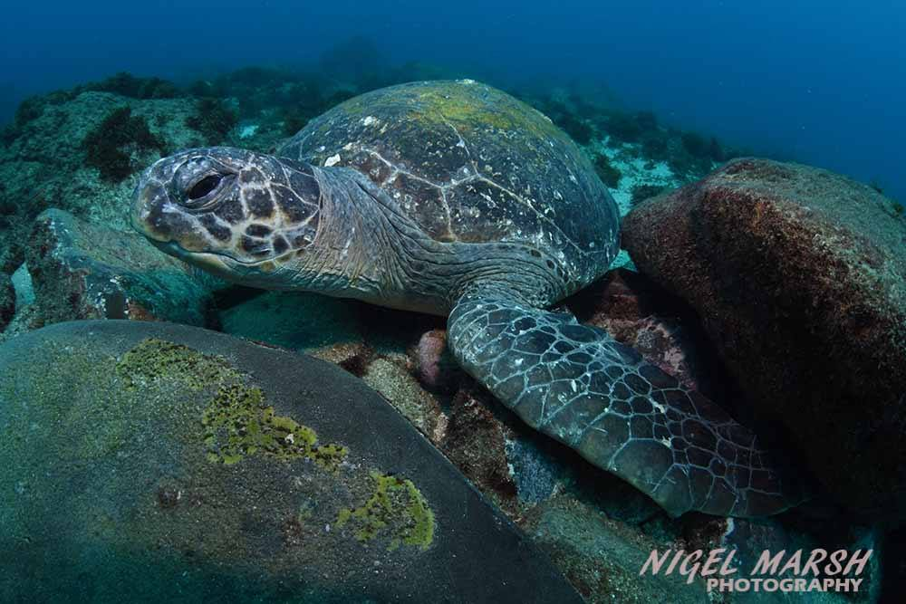 Cook Island Turtle Sanctuary