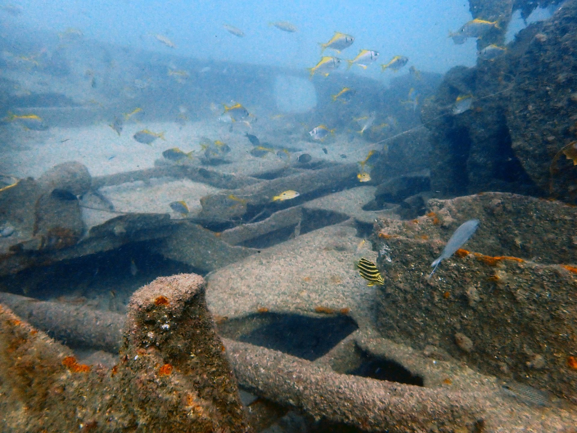 Aquarian Ship Wreck Gold Coast
