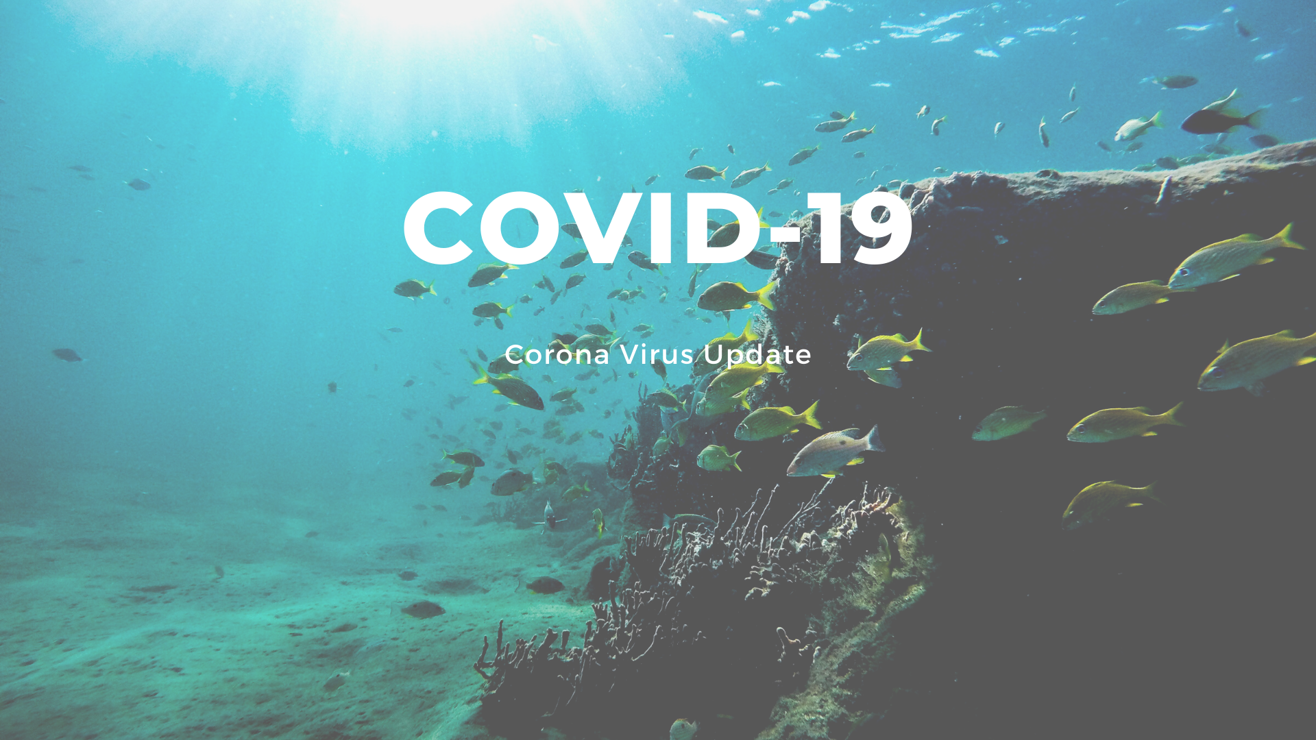 Corona Virus: Update on Diving Operations | Gold Coast Dive Adventures